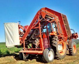Récolteuse à carottes Dewulf P3K-Profi