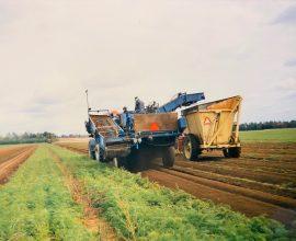 Récolteuse Dahlman pour carottes